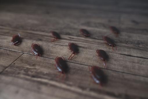 【驚愕!!】ゴキブリの卵や幼虫に関して種類別に解説|駆除の方法3選についても(2020年版)