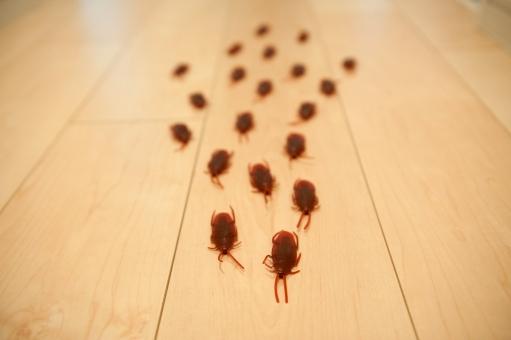 ゴキブリ対策には『ハッカ油』!効果が薄れた場合の解決策もご紹介(2020年最新版)